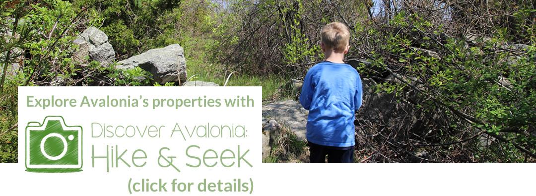 Avalonia's Hike & Seek