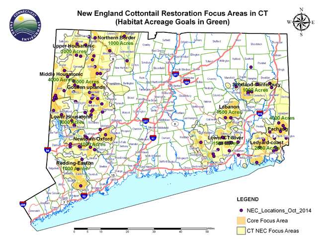 New England Cottontail Habitat Creation Project On Peck/Callahan Preserve, Stonington