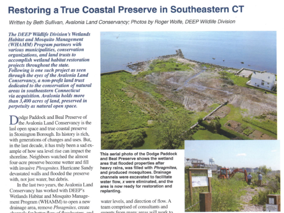 Restoring A True Coastal Preserve In Southeastern CT