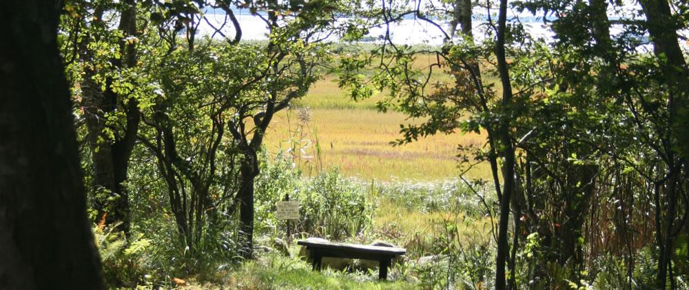 woolworth-marsh