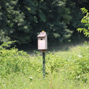 Bird house Preston Nature Preserve
