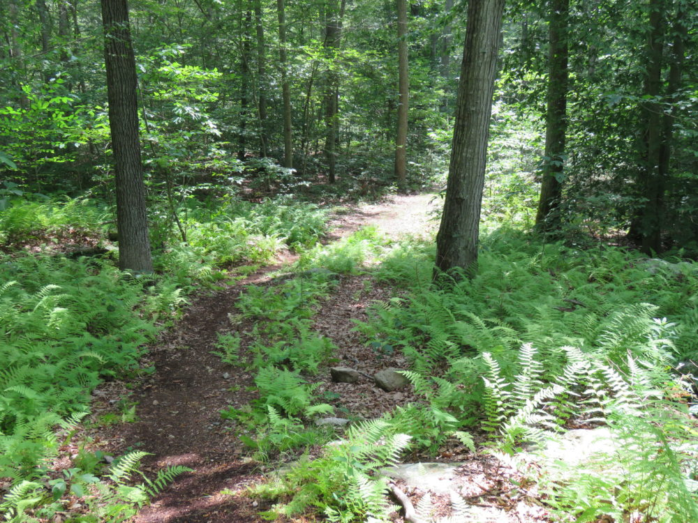 Avalonia Land Conservancy Receives Stonington Land Donation
