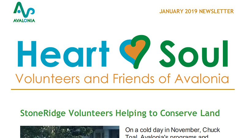 Volunteer Newsletter: January 2019